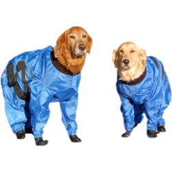 Fashion for dogs has finally come into its own.