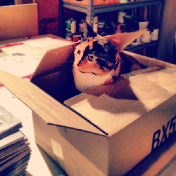 #cat in a box.  (Taken with  instagram )
