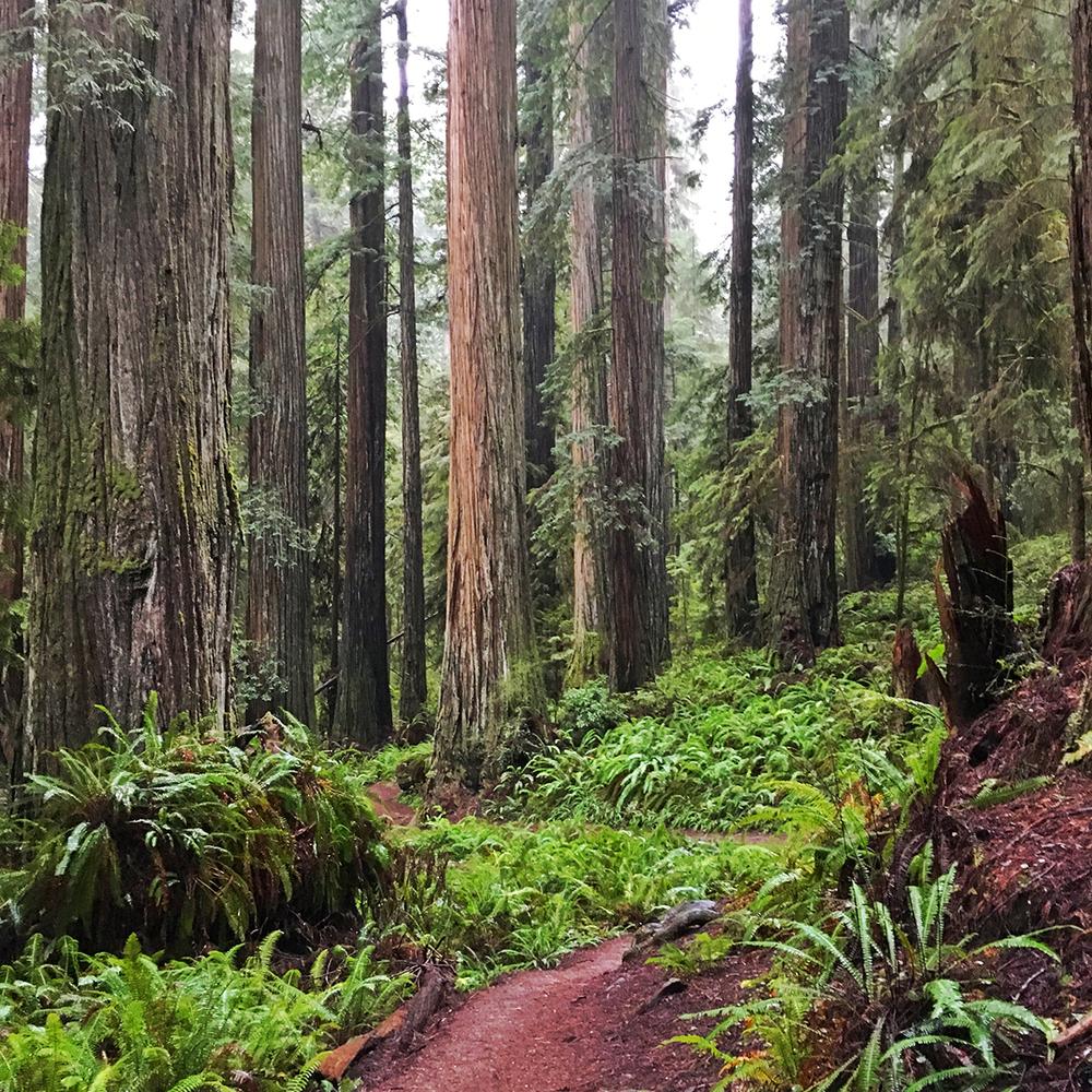 16_redwoods.jpg