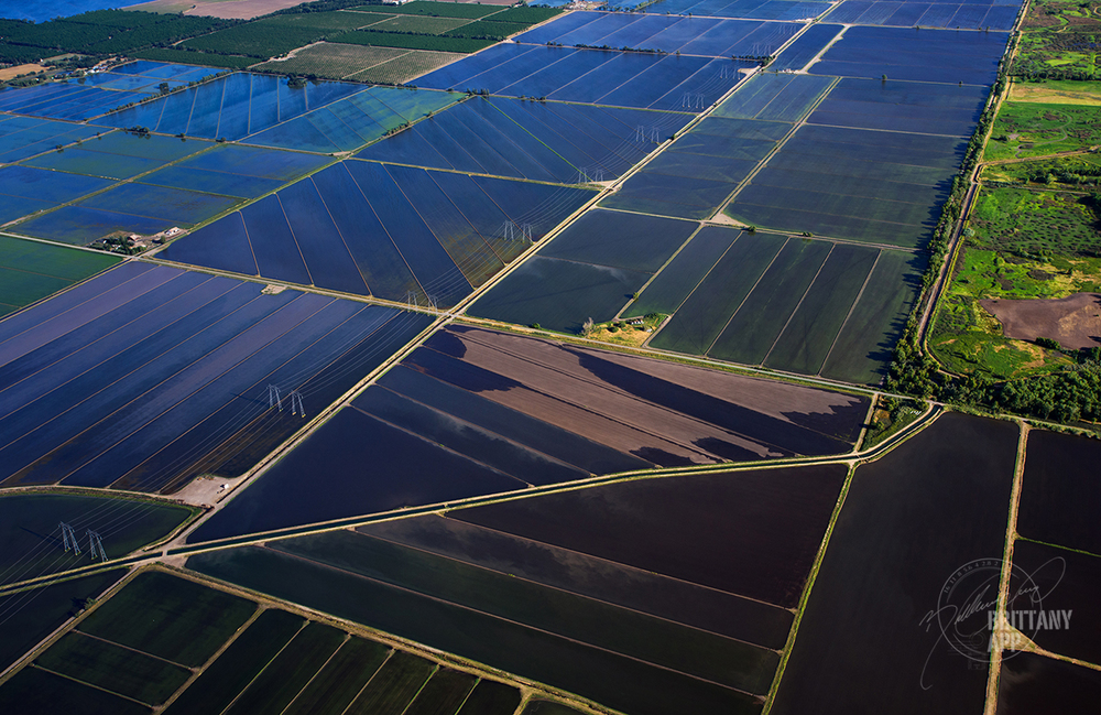 Flooded rice fields are a common sight in the Sacramento Valley. The average pound of rice requires 449 gallons (1,700 liters) of water to produce.