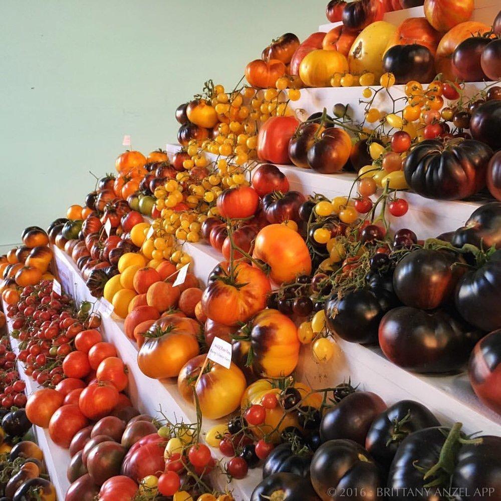 WTOWW_tomato.jpg