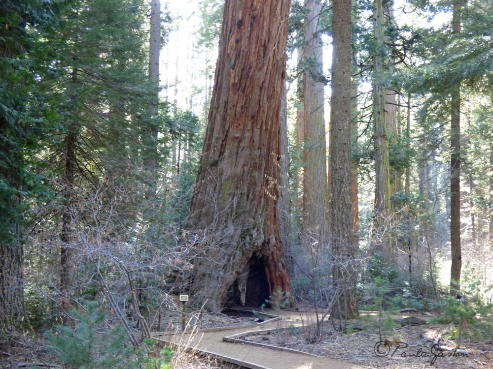 Joillakin lenkkipoluilla puutkin on suurempia