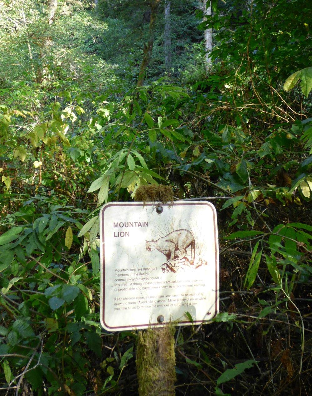 Kalifornian metsissä ja kukkuloilla on muutakin varottavaa kuin vain kasveja. Puumat liikkuvat lähinnä vain pimeällä mutta ovat arvaamattomia.