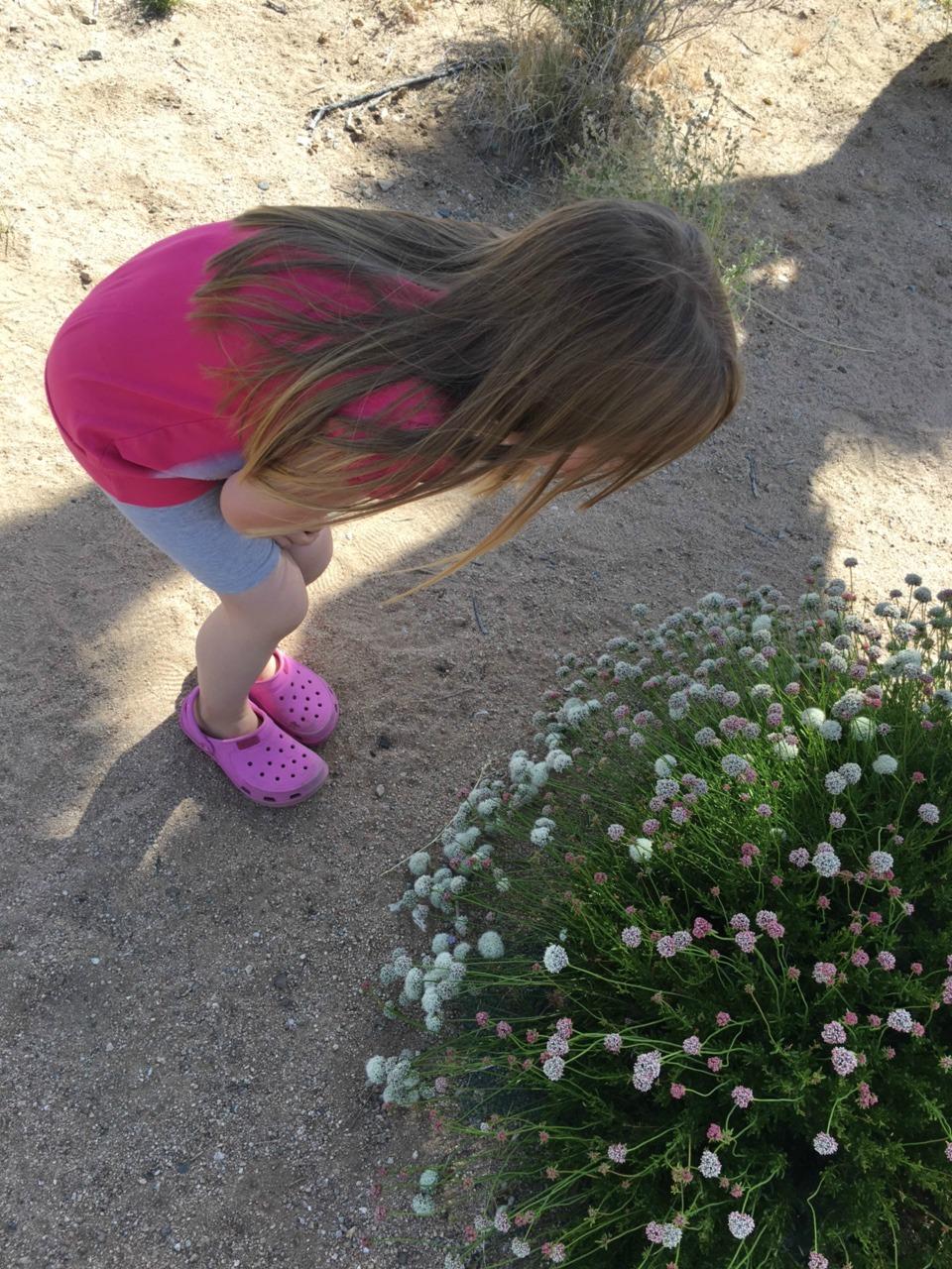 Toukokuussa vielä löytyi joitakin aavikkokukkia.