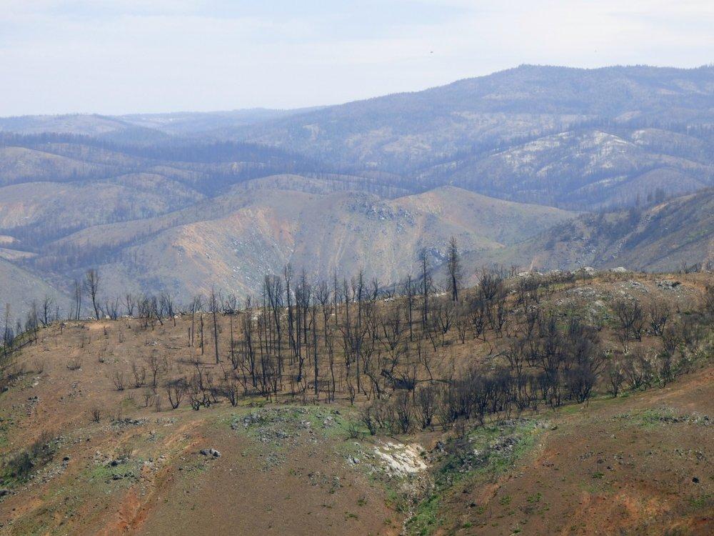 Palanutta metsää oli silmin kantamattomiin.