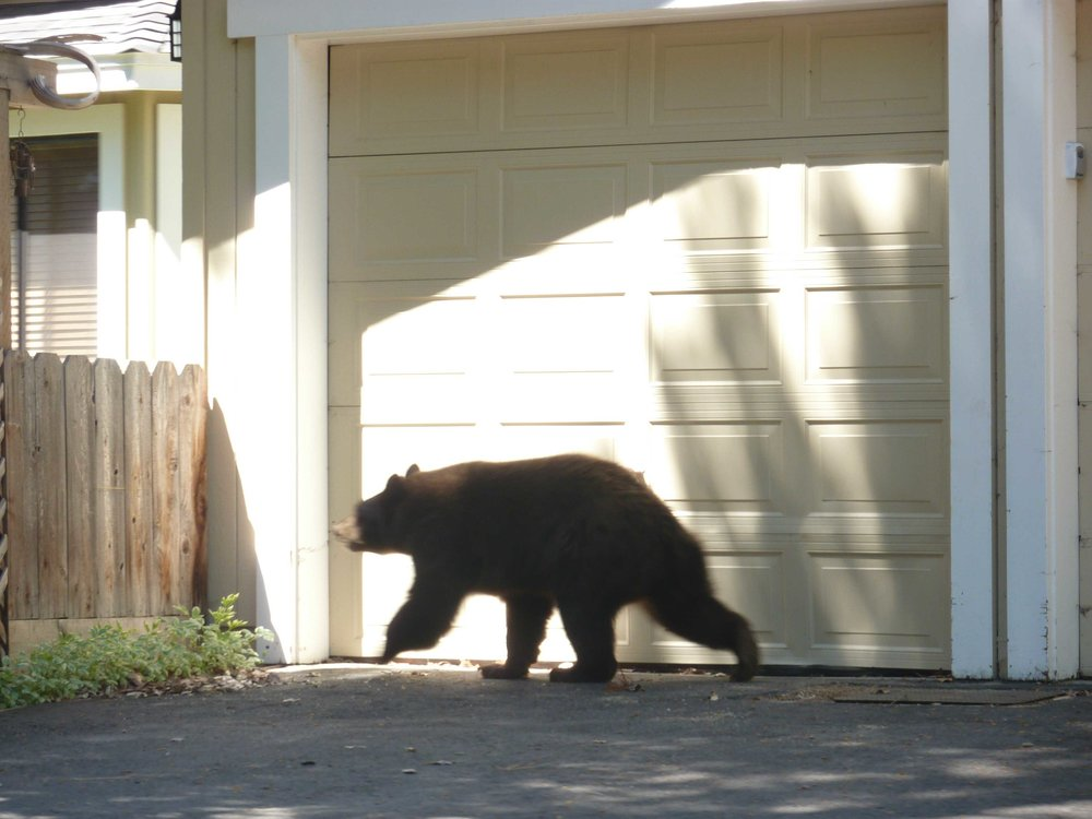This teddy bear with his friend was roaming around people's yards.