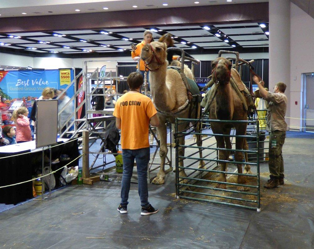Yksi tämän vuoden vetonauloista oli kameliratsastus. Mielestäni se oli vähän hämmentävää, mutta jonoa näytti piisaavan.