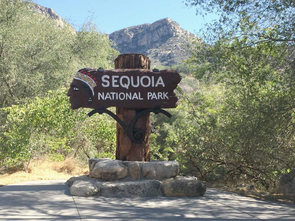 sequoia_kyltti.jpg