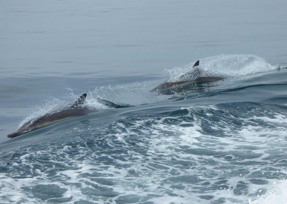 channel_delfiinit.jpg