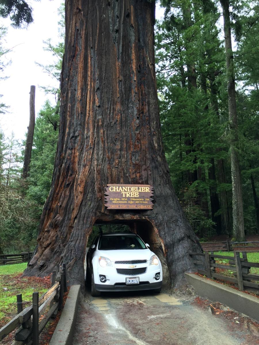 drive_thru_tree.jpg