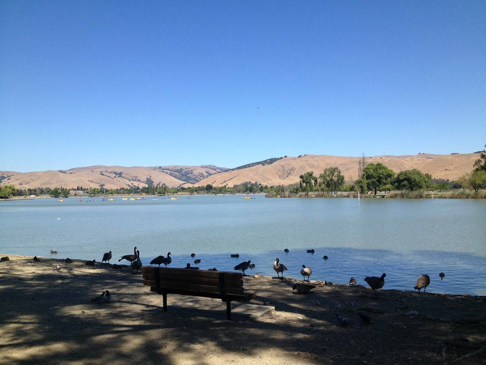 Hayward fault kulkee kutakuinkin tämän järven vierestä ja alta. Sen parkkipaikalla on nähtävissä miten linjakohta on siirtynyt aikojen saatossa.