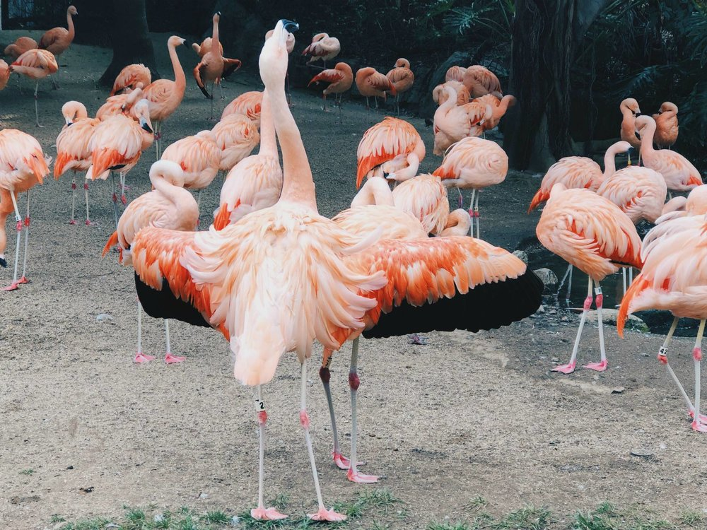 la_zoo_flamingos.jpg