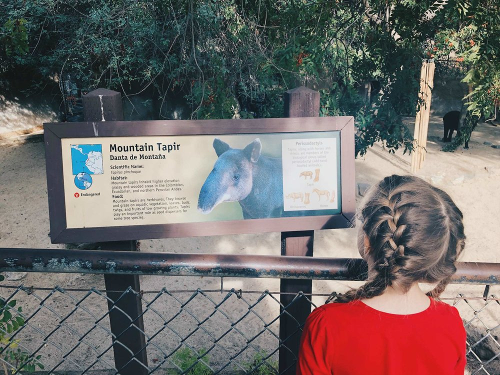 la_zoo_tapir.jpg