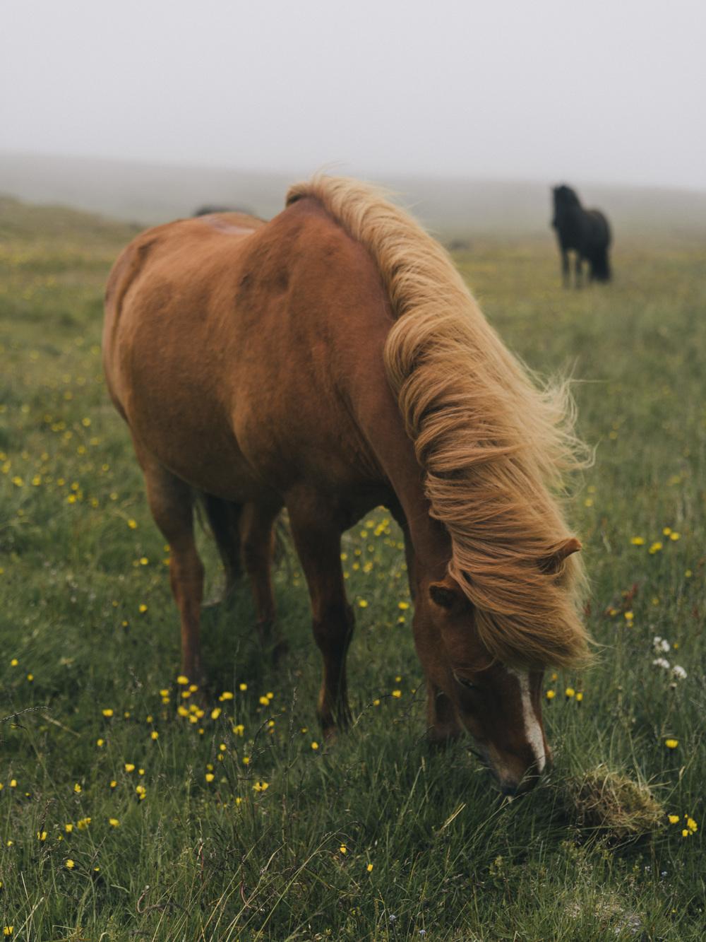the icelandic countryside.  |7.22.16| Grundarfjordur, Iceland