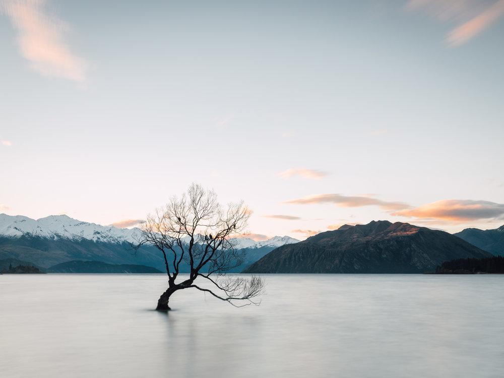That Wanaka Tree  |9.4.17| Wanaka, New Zealand