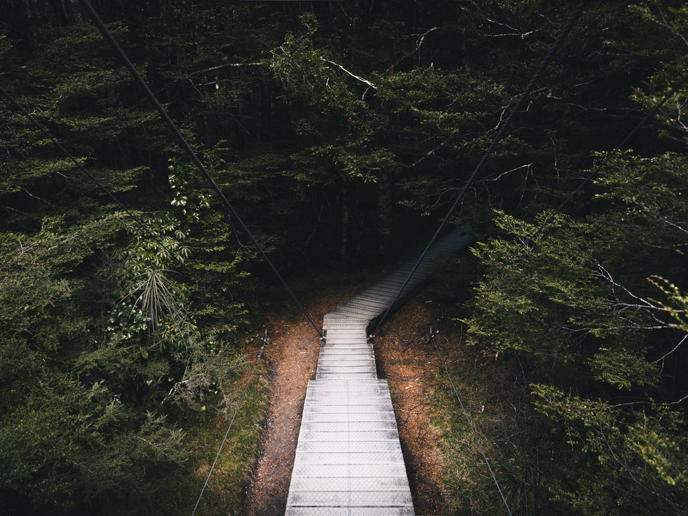 Path  Mt. Aspiring National Park, New Zealand |9.2.17|