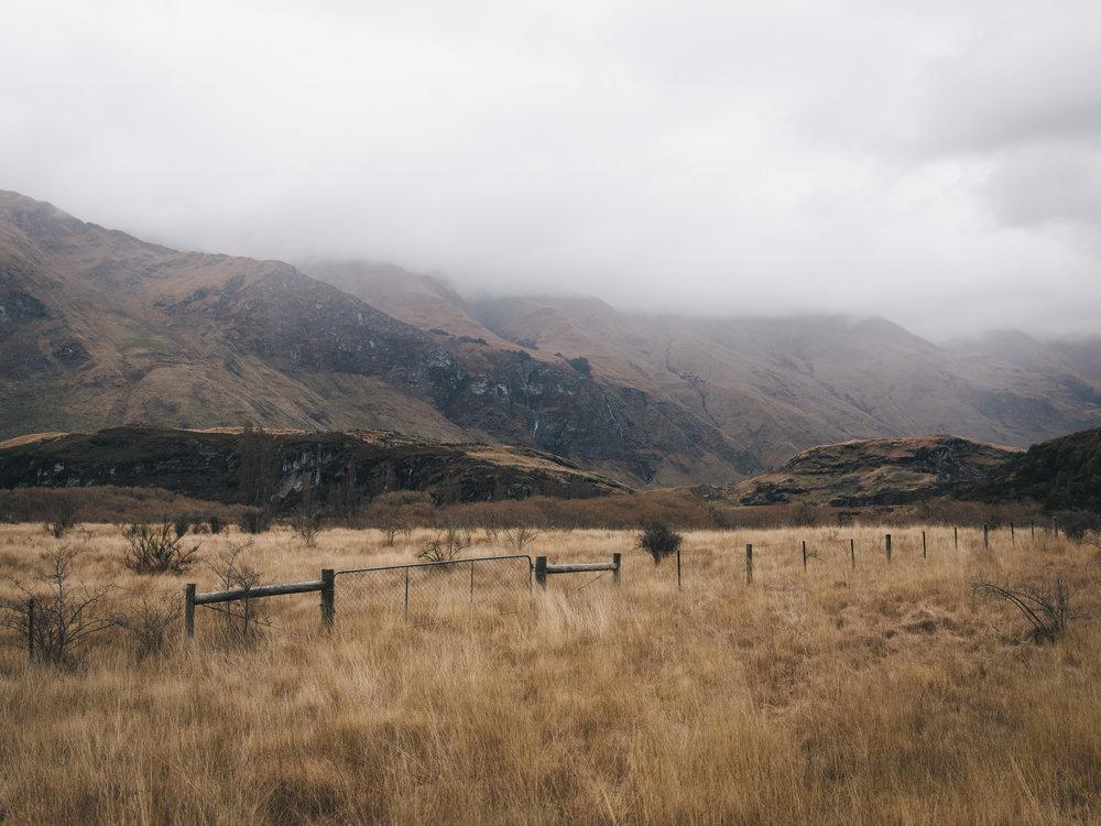 Golden Fields of the South Island  |8.28.17| Wanaka, New Zealand