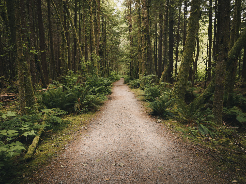 The Temperate Rainforest  |7.1.17| La Push, Washington
