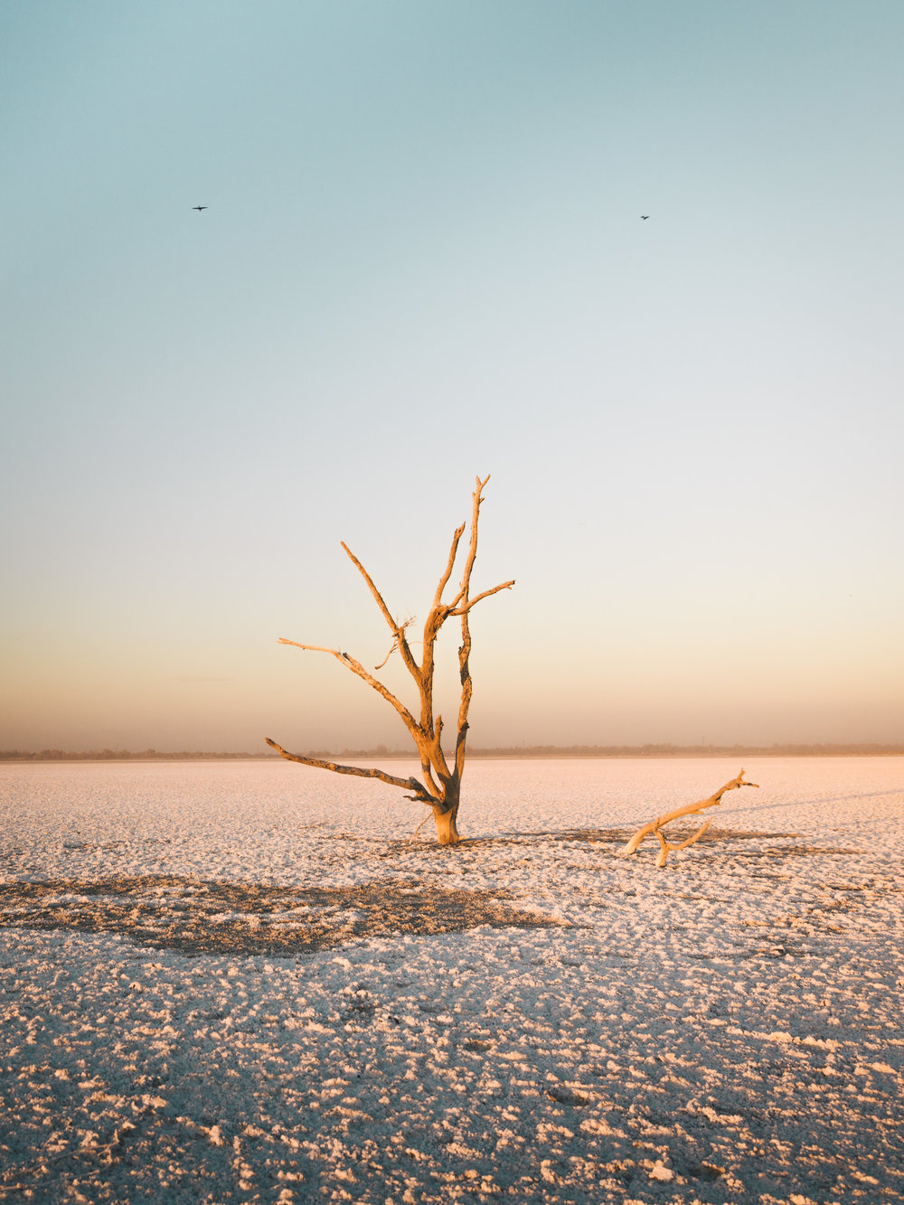 Mr. Lonely   1.31.16  Salton Sea, California