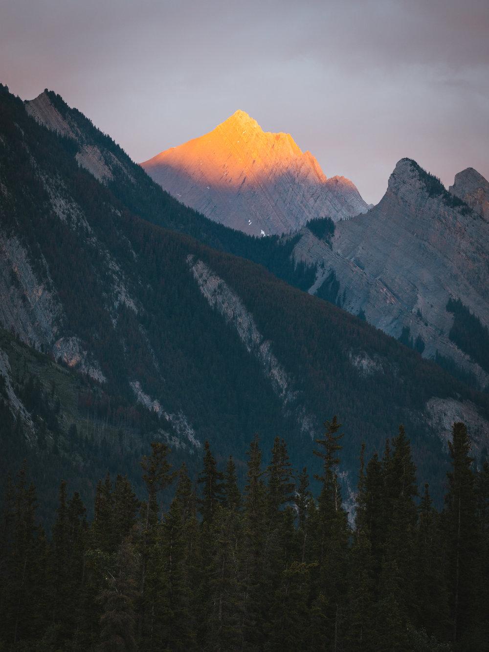 Jasper1.jpg