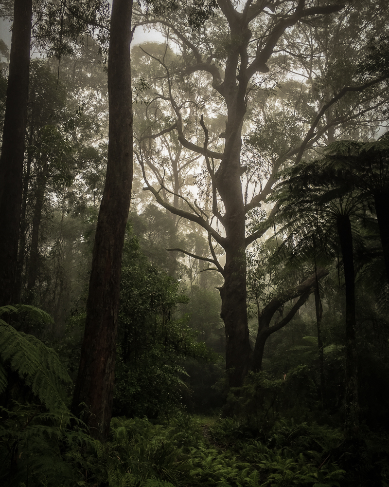So spooky you'd forget you're only 500m from one of the most pleasant towns in NSW