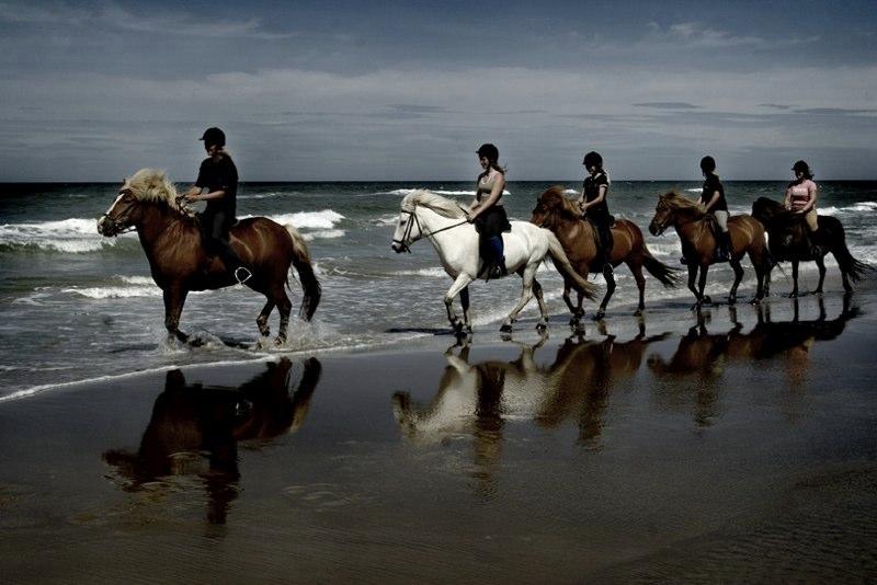 horse_14.jpg