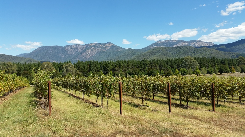 Feathertop Wines, Porepunkah