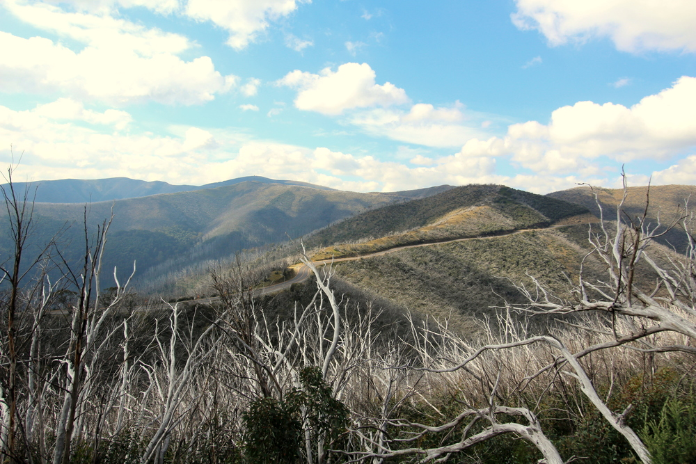 Great Alpine Road near Mt Hotham