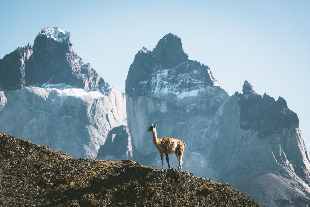 Patagonia 108 (1 of 1).jpg