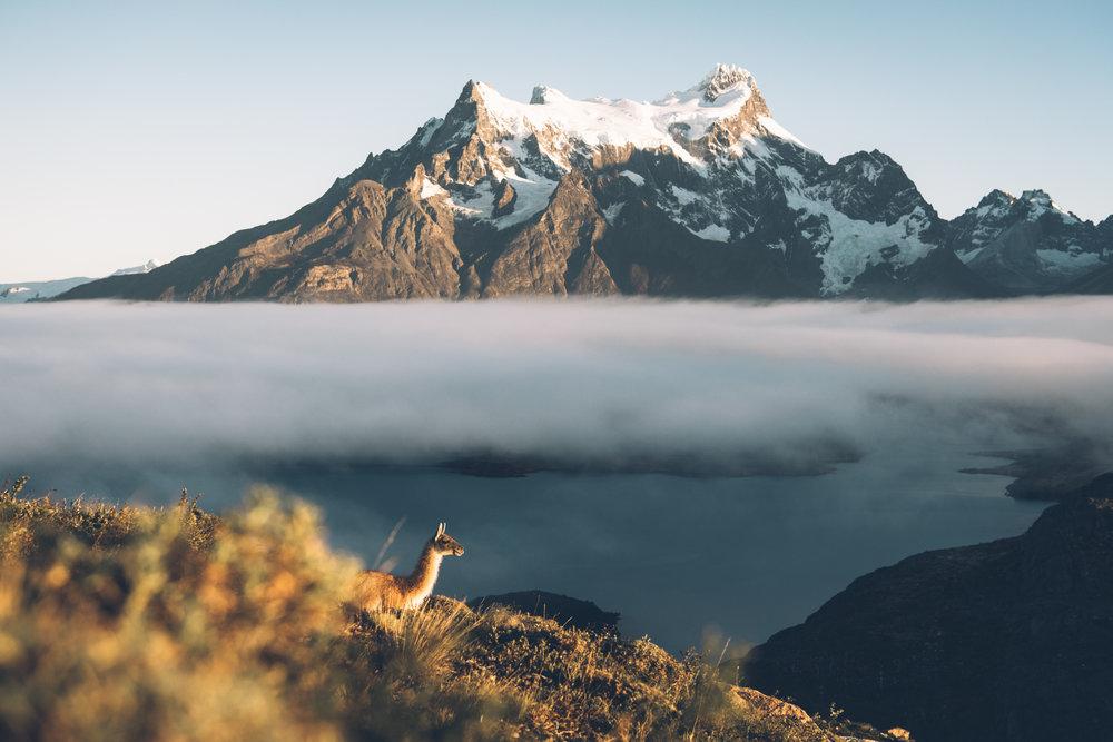 Patagonia 111 (1 of 1).jpg