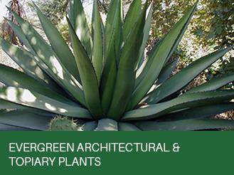 evergreen-achitectural.jpg