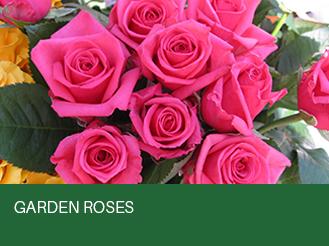 garden-roses.jpg