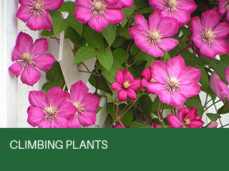 climbing-plants.jpg