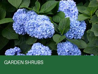 garden-shrubs.jpg