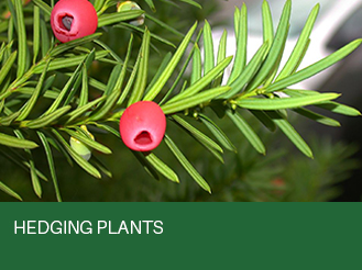 hedging-plants.jpg