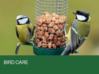 bird-care.jpg