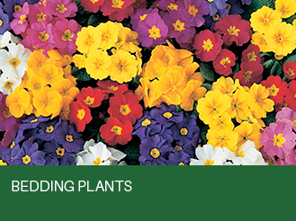 bedding-plants.jpg