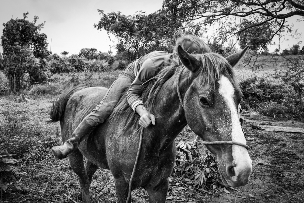 An ongoing project documenting the life and environment of the Cuban Camposinos (Countrymen), those who live off of the land for their livelihood.  It encompasses Land and Sea.  It began in January of 2016 and is set to be completed by May of 2018.