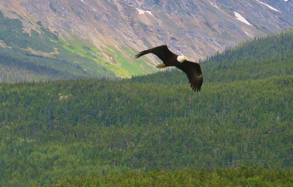Eagle Sagway copy.jpg