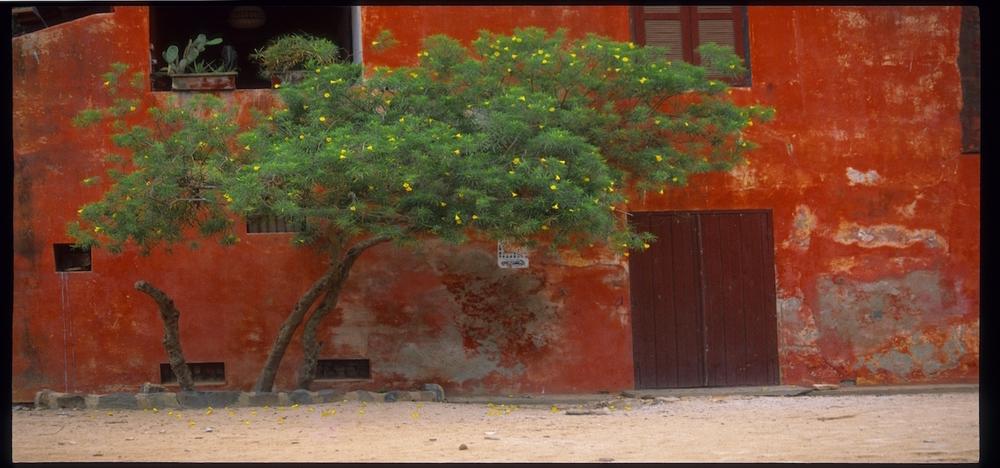 Lemon Tree (web).jpg