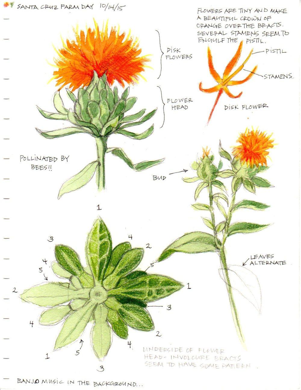 Botanical Study
