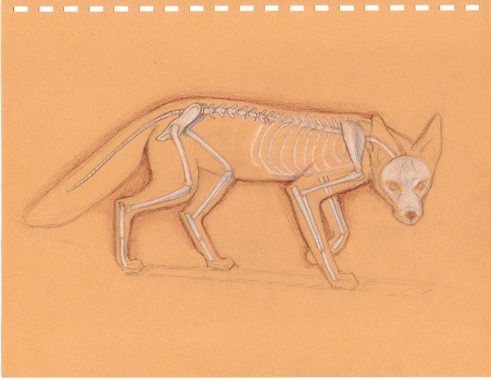 Fox Skeleton