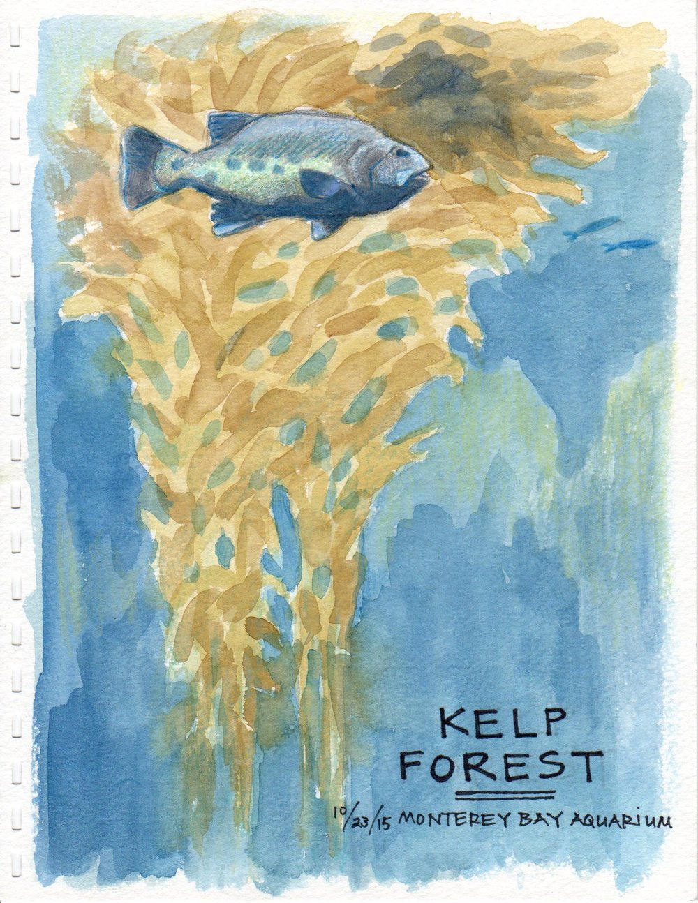 Kelp Forest (Giant sea bass)
