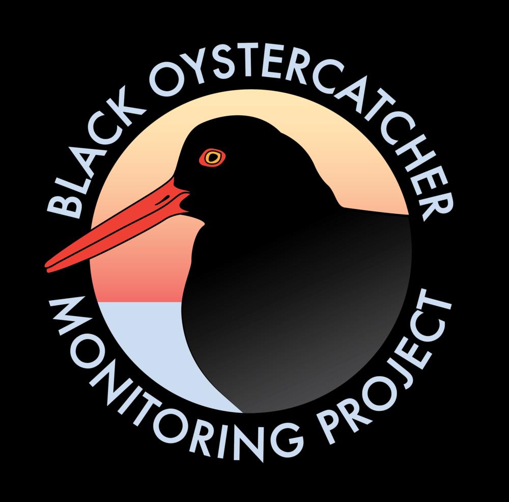 Black Oystercatcher (1)