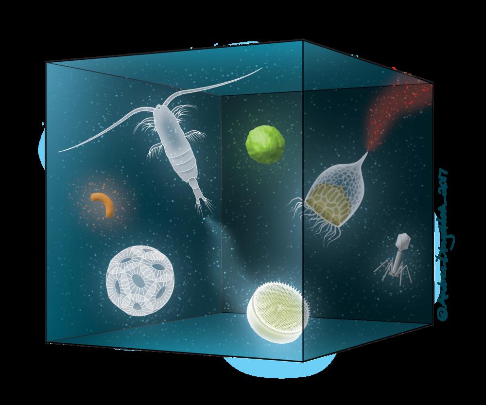Plankton Cube