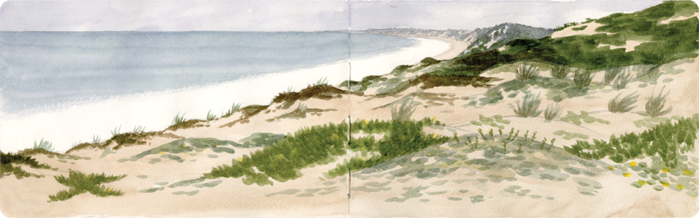 Marina_Dunes.png