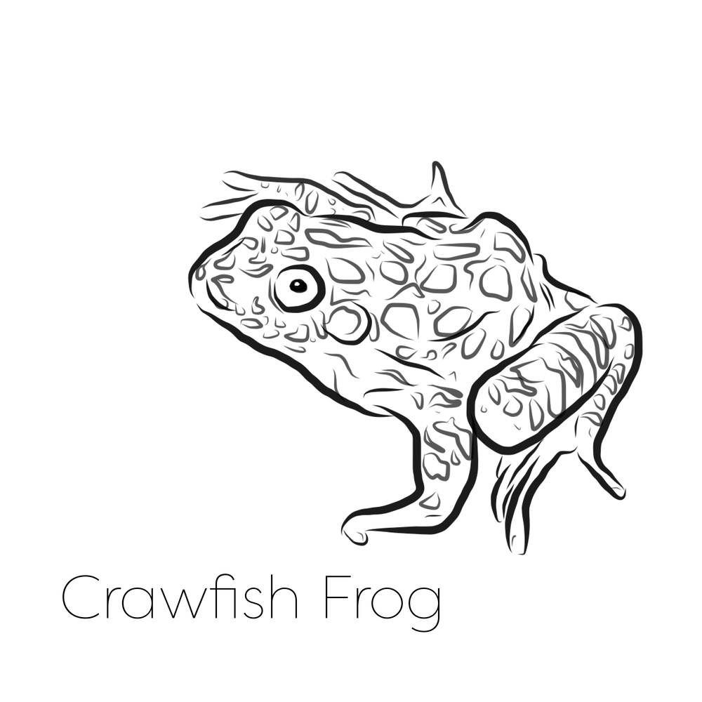 crawfish frog.jpg