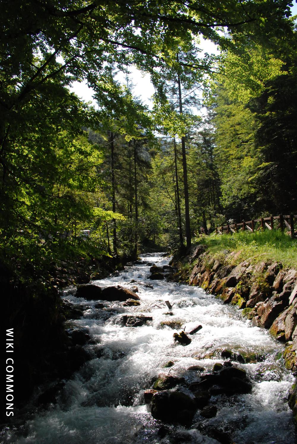 natural vegetation and wildlife wikipedia