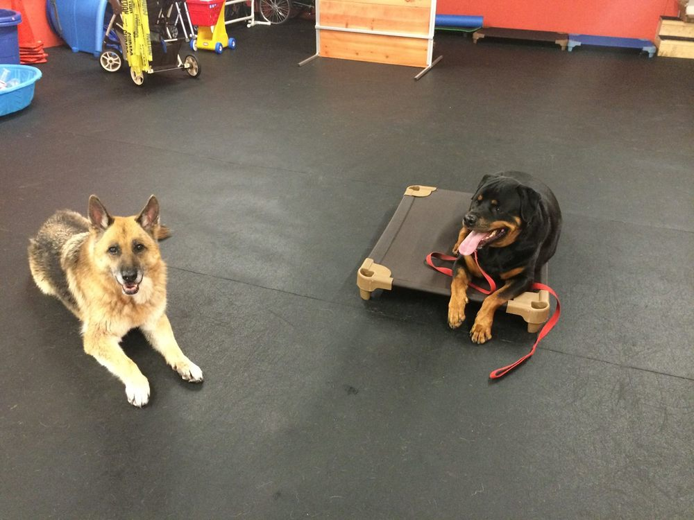 german shepherd and rottweiler training