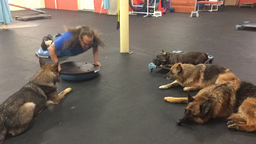 Jeff Gellman training german shepherds